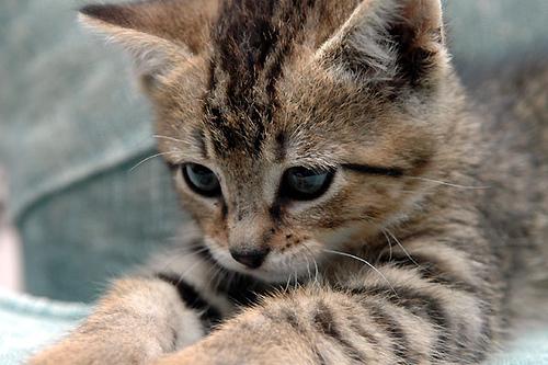 Kitten111