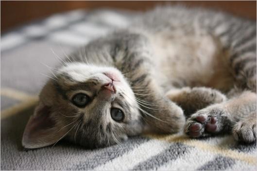 loving-cat